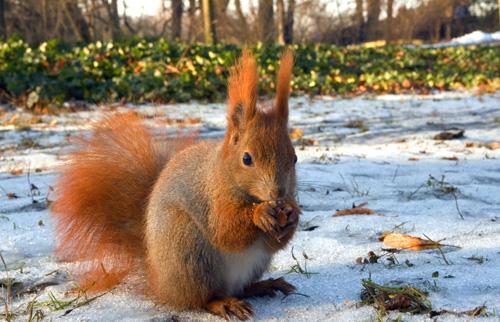 33+1 poze: Animale adorabile prin zapada - Poza 25