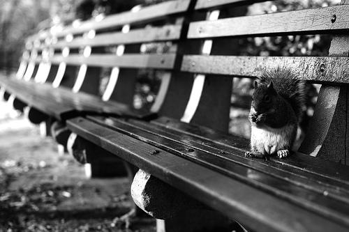 Vedeta zilei: veverita - Poza 16