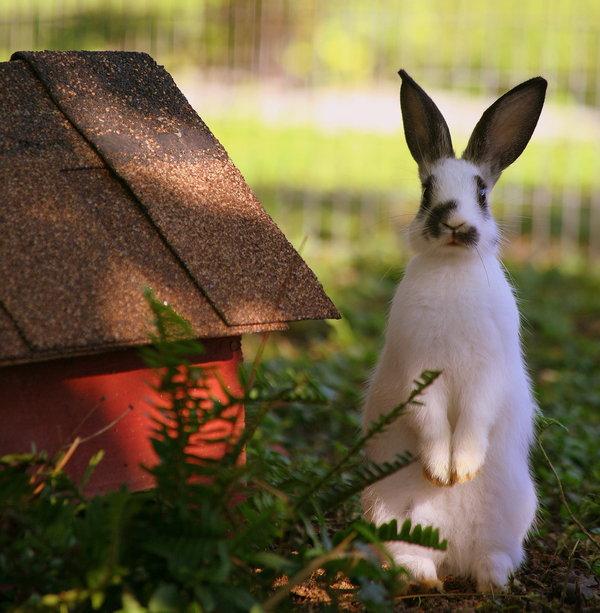 Atentie: Animale simpatice in 45 de poze! - Poza 38