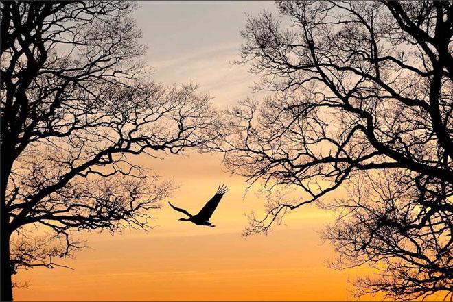 25 de fotografii cu frumoasa natura salbatica - Poza 1