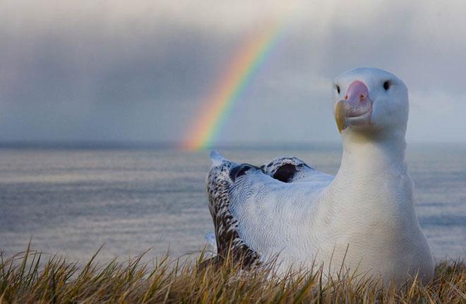 25 de fotografii cu frumoasa natura salbatica - Poza 10
