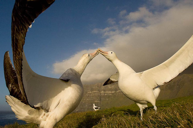 25 de fotografii cu frumoasa natura salbatica - Poza 12