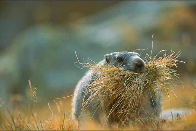 25 de fotografii cu frumoasa natura salbatica - Poza 16