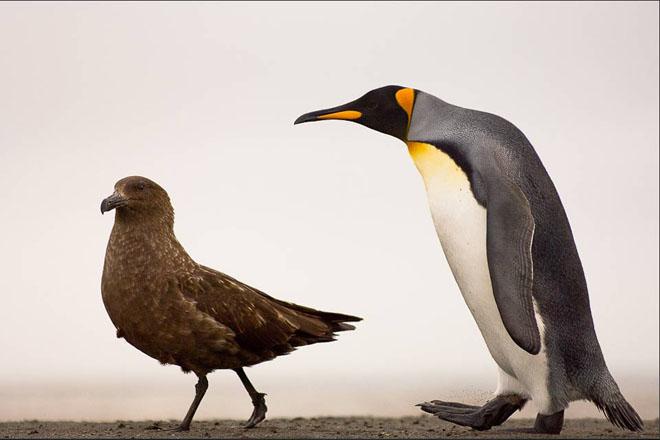 25 de fotografii cu frumoasa natura salbatica - Poza 21