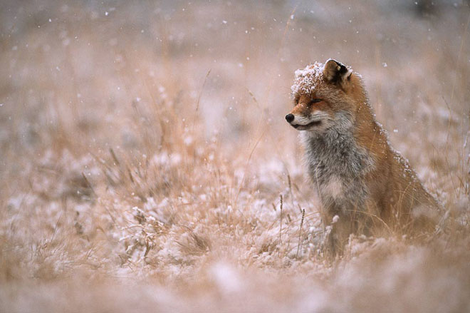 25 de fotografii cu frumoasa natura salbatica - Poza 22