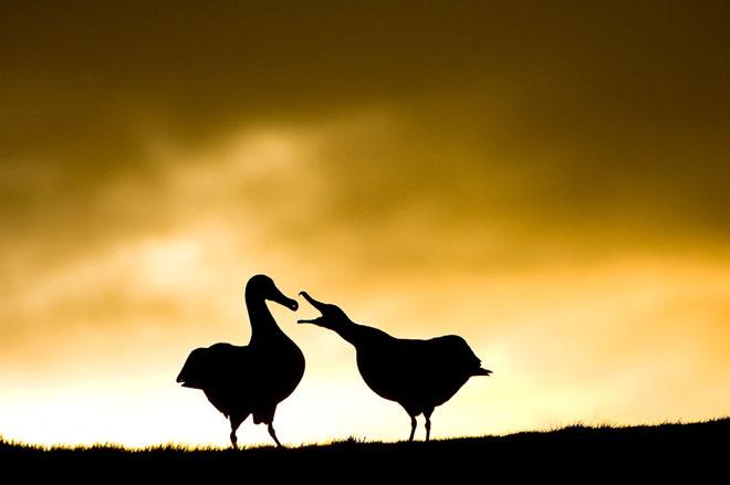 25 de fotografii cu frumoasa natura salbatica - Poza 25