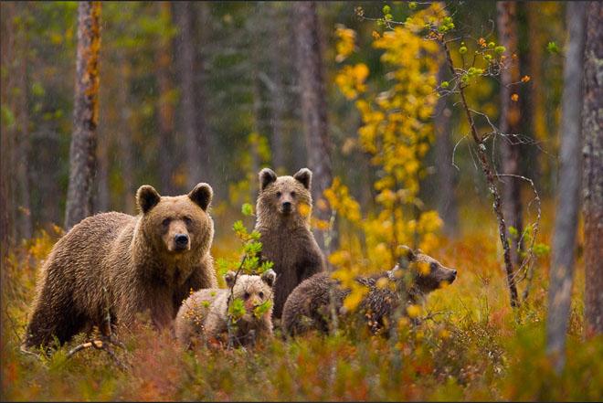 25 de fotografii cu frumoasa natura salbatica - Poza 3