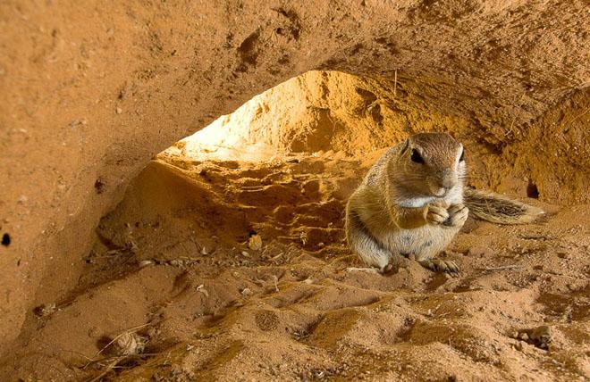 25 de fotografii cu frumoasa natura salbatica - Poza 9