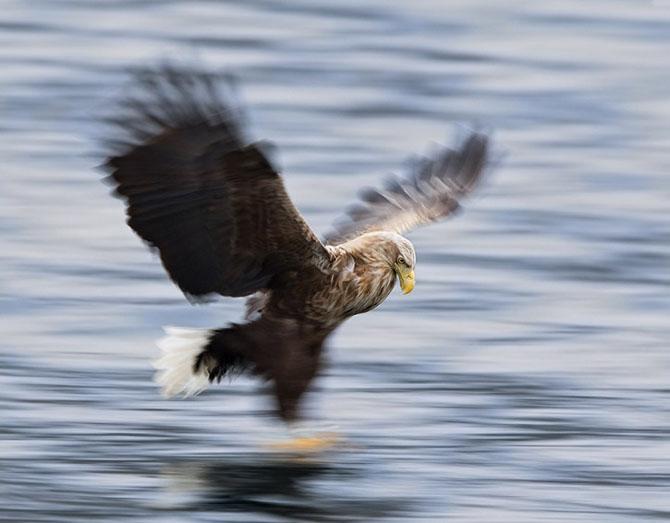 Natura in 28 de fotografii de Stian Holmen - Poza 1