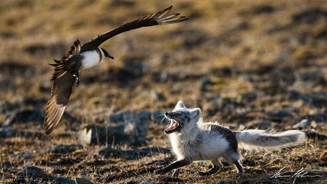 Natura in 28 de fotografii de Stian Holmen - Poza 8