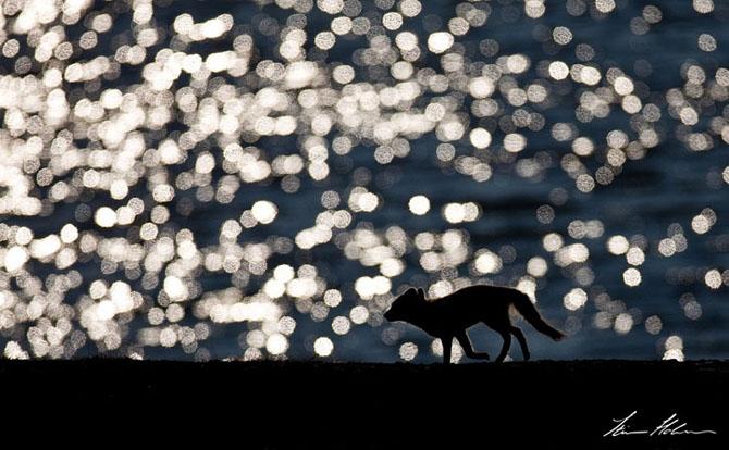 Natura in 28 de fotografii de Stian Holmen - Poza 13