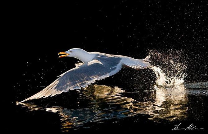 Natura in 28 de fotografii de Stian Holmen - Poza 14