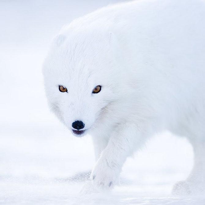 Natura in 28 de fotografii de Stian Holmen - Poza 15