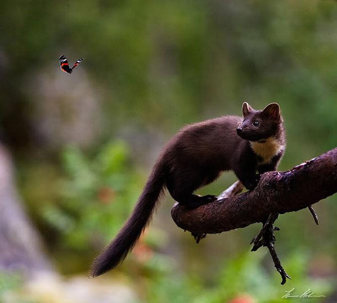 Natura in 28 de fotografii de Stian Holmen - Poza 16