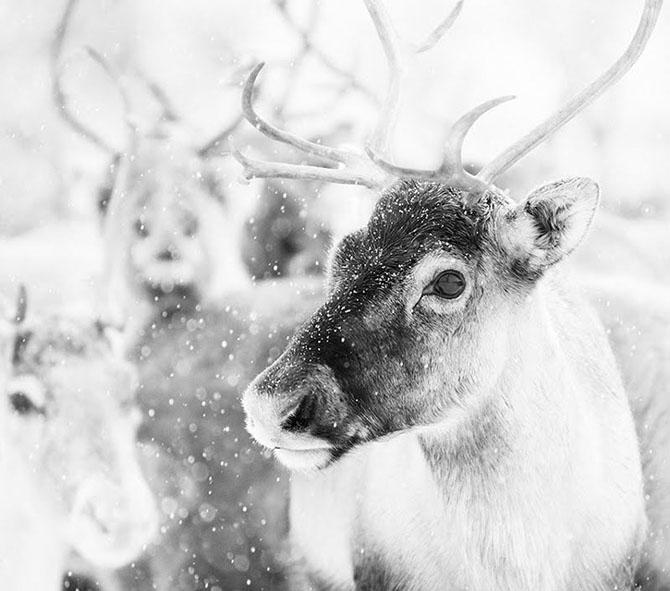 Natura in 28 de fotografii de Stian Holmen - Poza 17