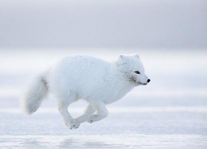 Natura in 28 de fotografii de Stian Holmen - Poza 19
