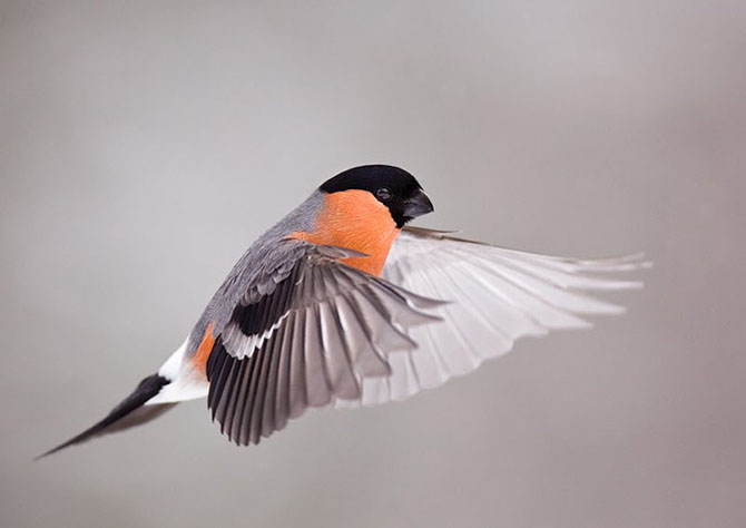 Natura in 28 de fotografii de Stian Holmen - Poza 20