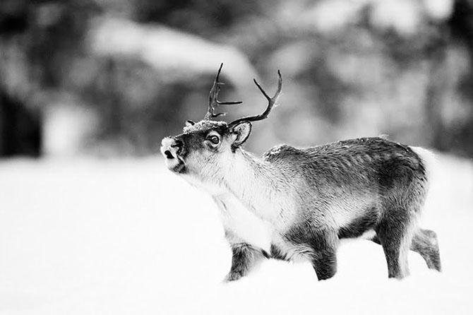 Natura in 28 de fotografii de Stian Holmen - Poza 22