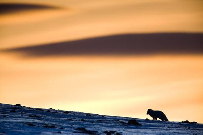 Natura in 28 de fotografii de Stian Holmen - Poza 23