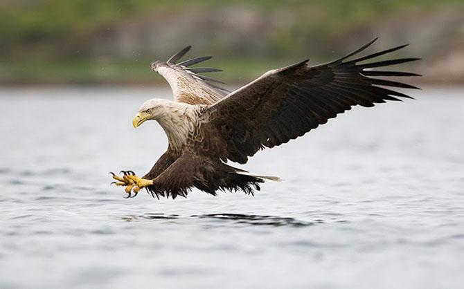 Natura in 28 de fotografii de Stian Holmen - Poza 25