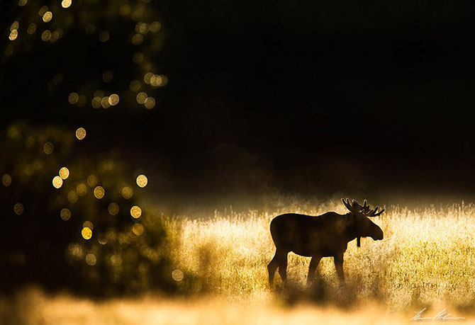 Natura in 28 de fotografii de Stian Holmen - Poza 4