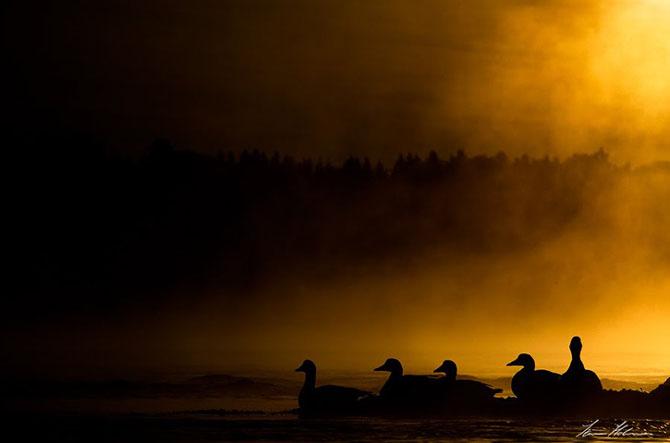 Natura in 28 de fotografii de Stian Holmen - Poza 5