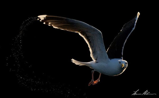 Natura in 28 de fotografii de Stian Holmen - Poza 6