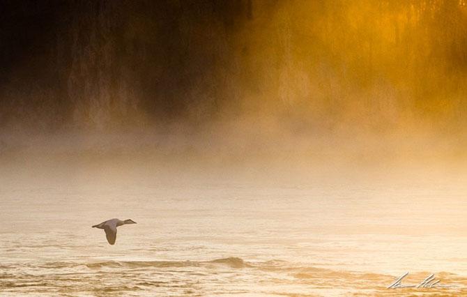 Natura in 28 de fotografii de Stian Holmen - Poza 7