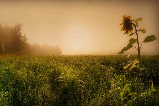 La rasarit de soare: 33 de poze minunate - Poza 27