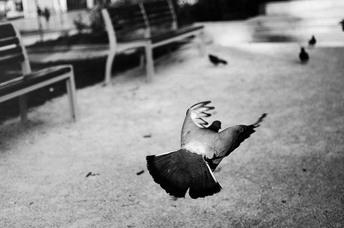 27 de poze fantastice de Theo Gosselin - Poza 16