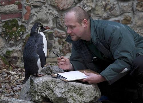 Frumusete de pinguin