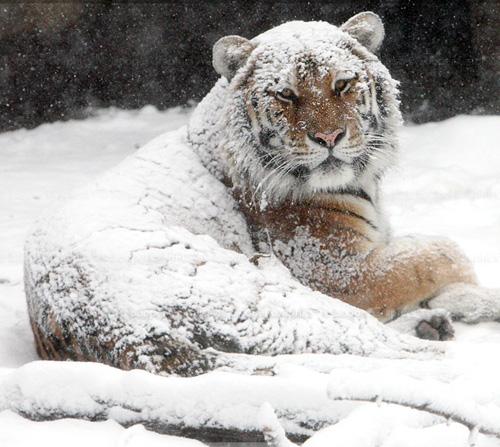 33+1 poze: Animale adorabile prin zapada - Poza 27
