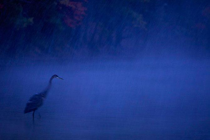 Tim Laman are 30 de poze pentru tine - Poza 28
