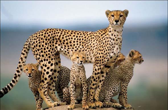 NG 2009: Top 20 poze cu animale - Poza 1