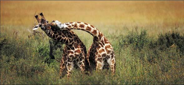 NG 2009: Top 20 poze cu animale - Poza 10