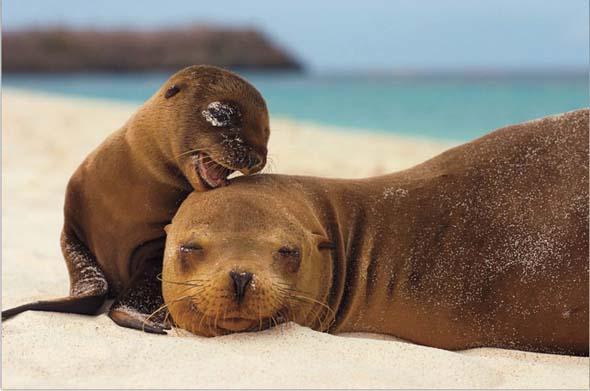 NG 2009: Top 20 poze cu animale - Poza 16