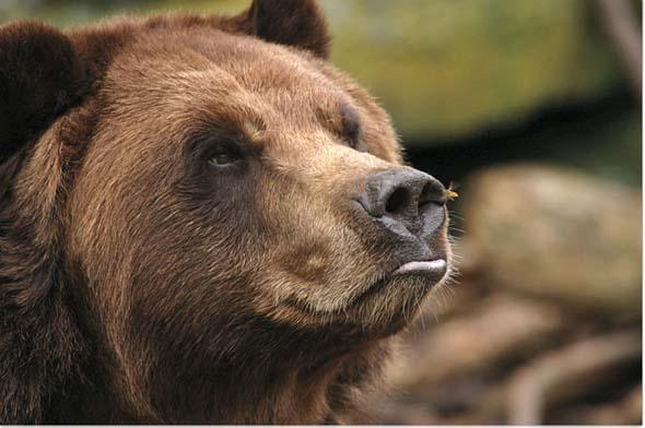 NG 2009: Top 20 poze cu animale - Poza 17