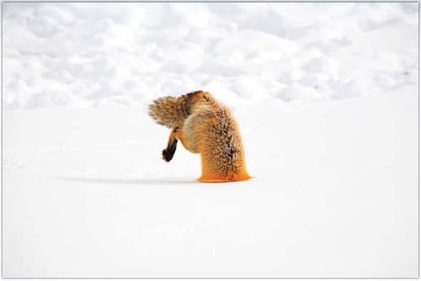 NG 2009: Top 20 poze cu animale - Poza 19