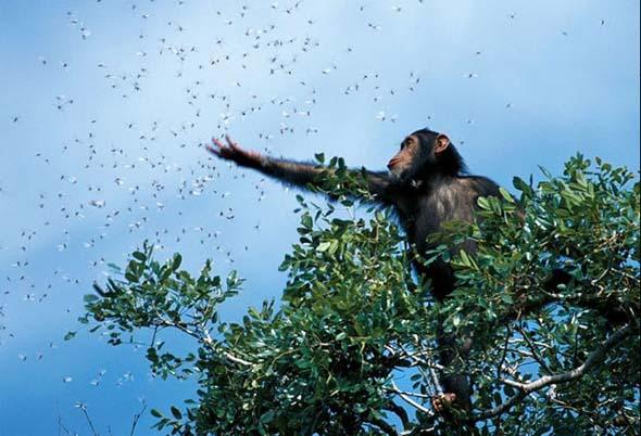 NG 2009: Top 20 poze cu animale - Poza 20