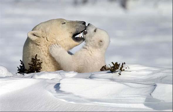 NG 2009: Top 20 poze cu animale - Poza 5