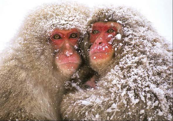 NG 2009: Top 20 poze cu animale - Poza 9