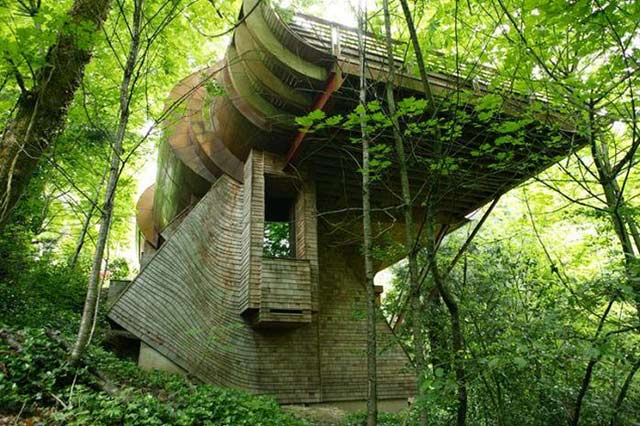 Tree House - Poza 1