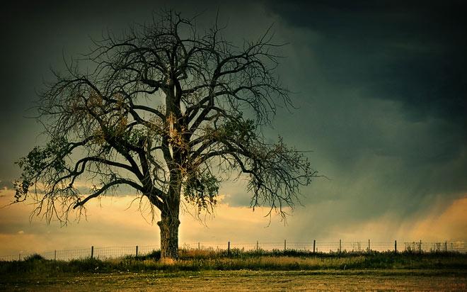 Copacii demni se inalta in 30 de poze minunate! - Poza 10