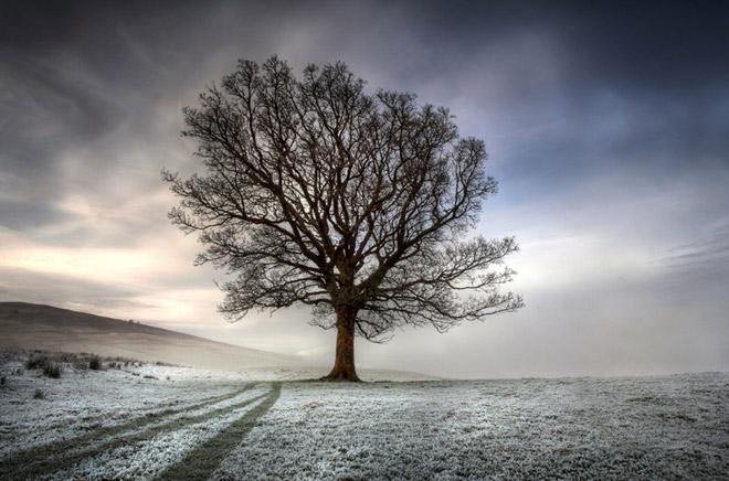 Copacii demni se inalta in 30 de poze minunate! - Poza 13