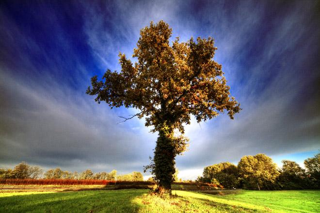 Copacii demni se inalta in 30 de poze minunate! - Poza 14