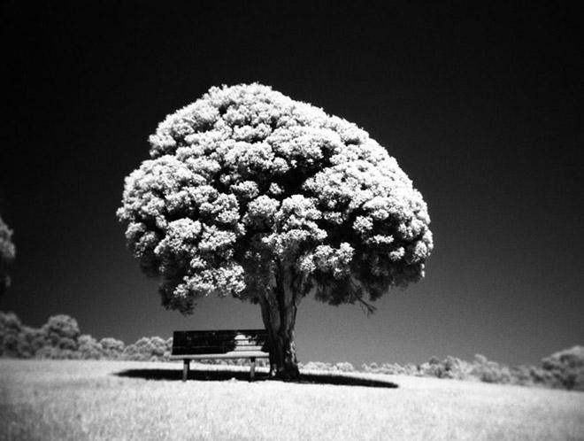 Copacii demni se inalta in 30 de poze minunate! - Poza 15