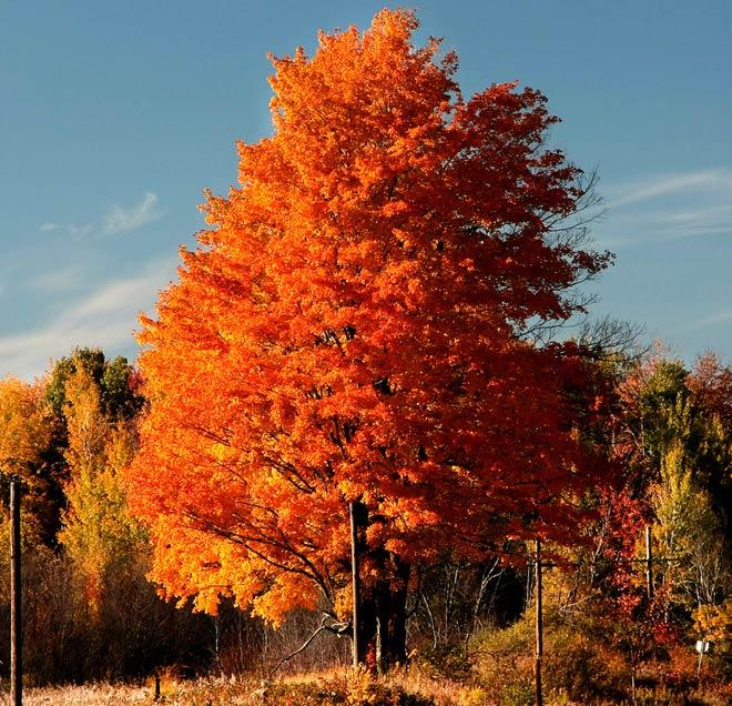 Copacii demni se inalta in 30 de poze minunate! - Poza 16