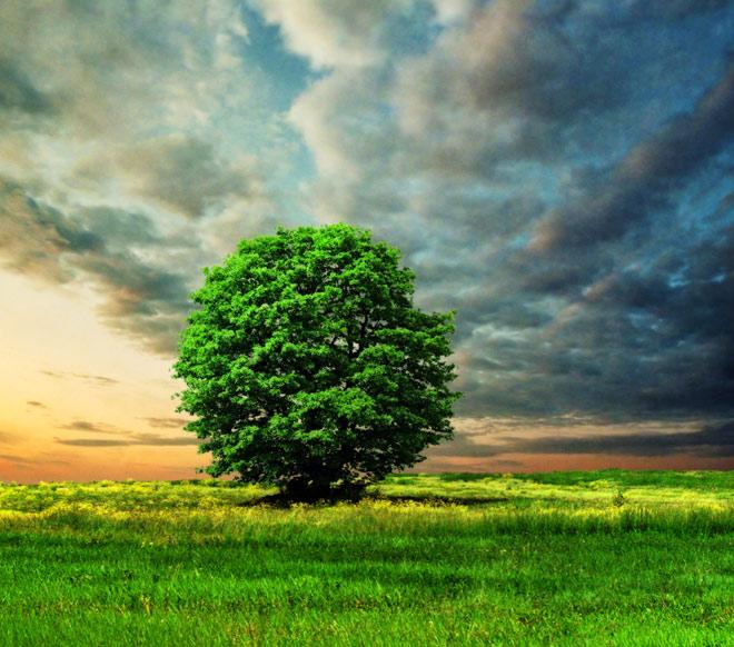 Copacii demni se inalta in 30 de poze minunate! - Poza 17