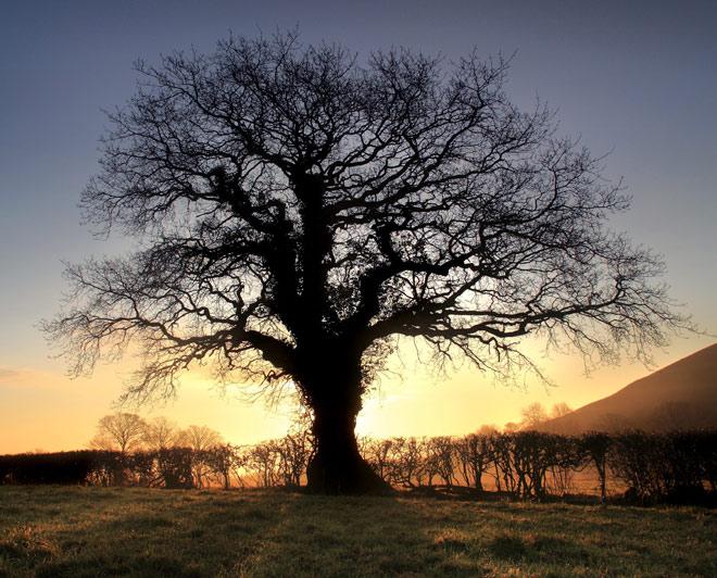 Copacii demni se inalta in 30 de poze minunate! - Poza 18
