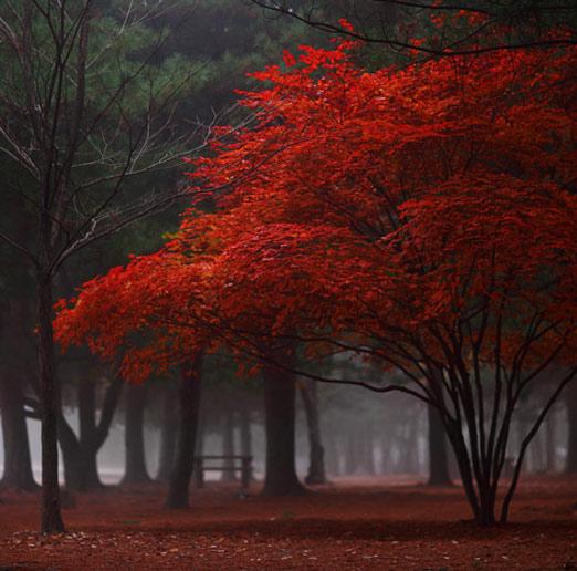 Copacii demni se inalta in 30 de poze minunate! - Poza 19
